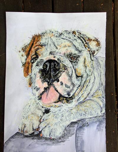Boris the British Bulldog